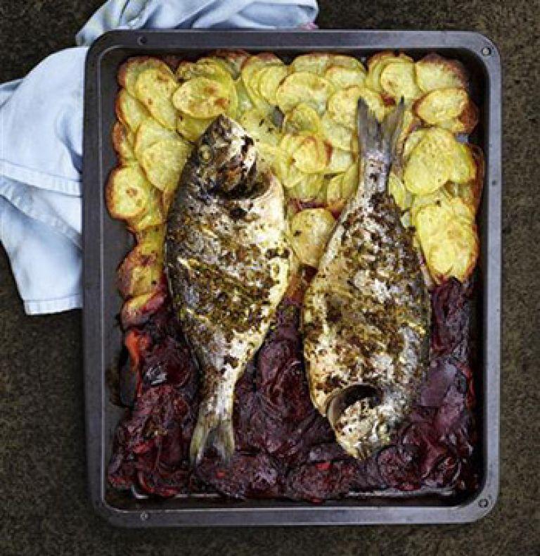 Dorade Fisch Rezept