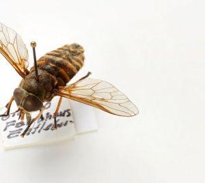 Insektenstiche und Bisse